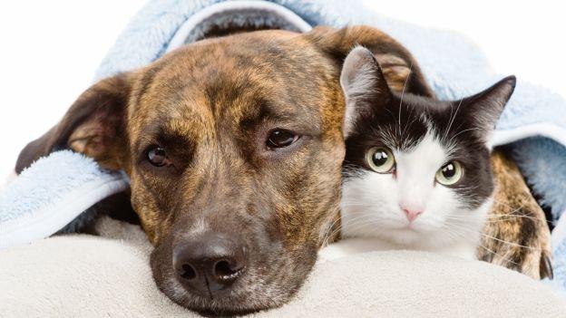 1-cane-gatto-salute-a-rischio-causa-crisi